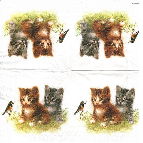 lautasliina kissa napkin